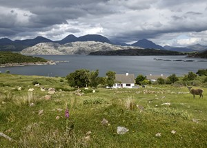 Red deer and sheep at cottage at Kenmore on Loch a Chracaich of Loch Torridon with fish farm pens Scottish Highlands Scotland UK.jpeg