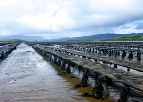 Clew Bay Oysters.jpg (1)